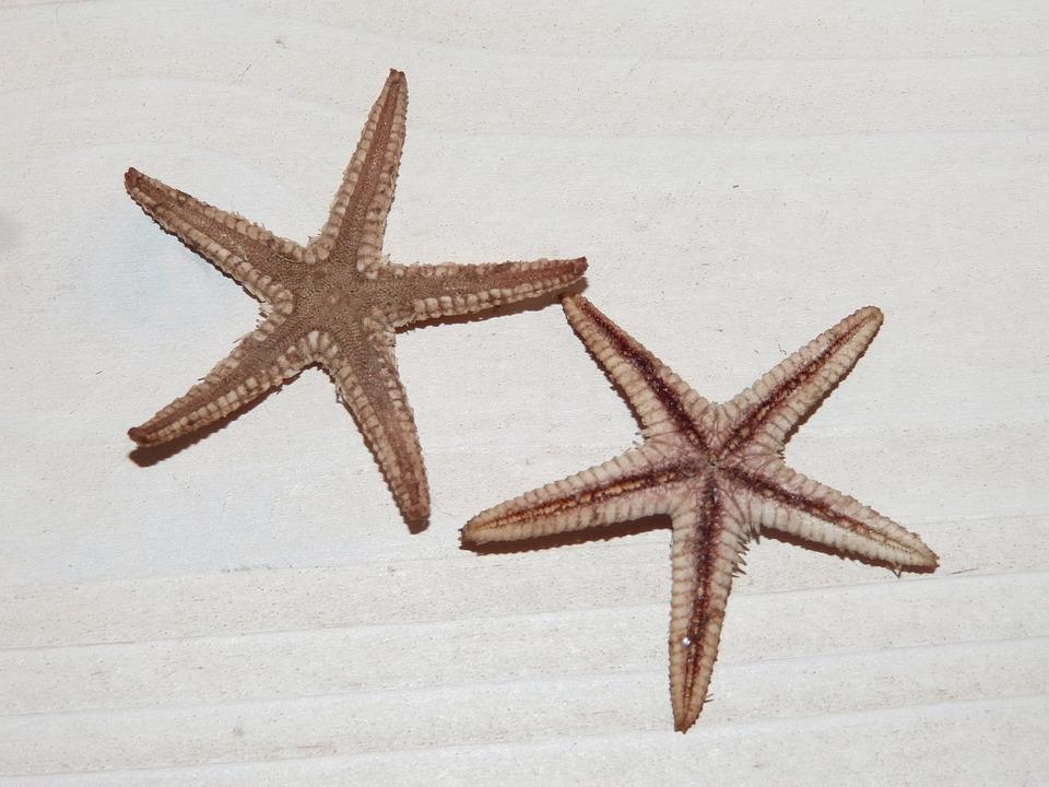 Sea Star, Star, Starfish