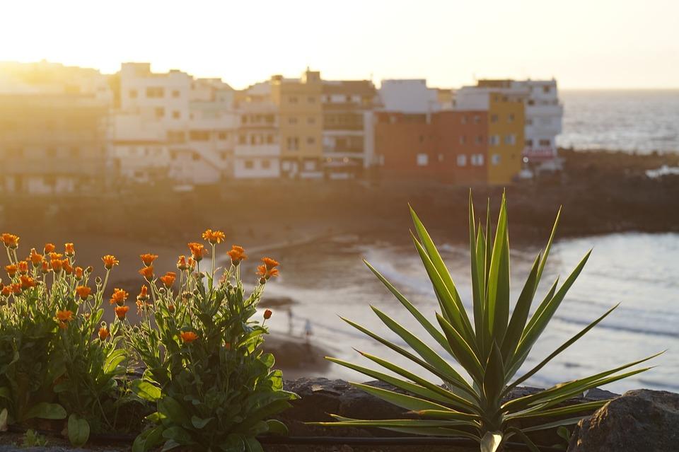 Sunset, Sea, Ocean, Flowers, Light, Sky, Water, Beach
