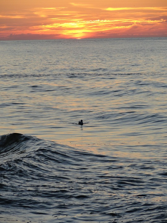 Sea, Sunset, Duck, Bird, Loneliness