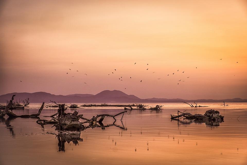 Sunset, Sea, Seagulls, Colors, Landscape, Lake, Water
