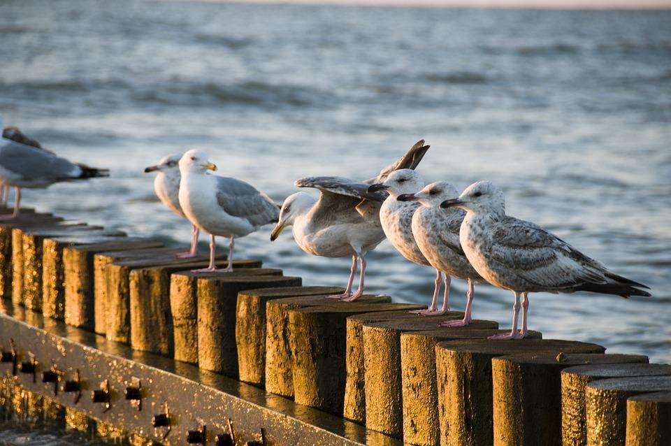 The Baltic Sea, Sea, Beach, The Coast, Sand, Water