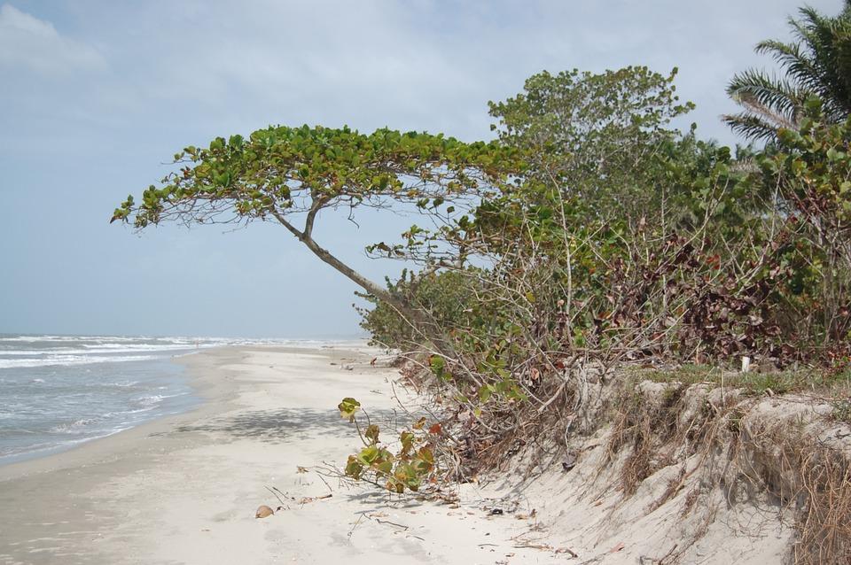 Honduras, Beach, Shore, Sea, Tropical, Ocean, Summer