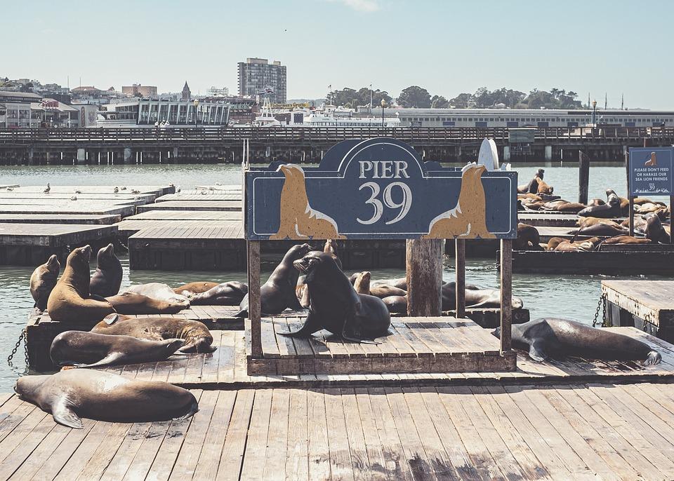 Port, Pier, Usa, San Francisco, Ocean, Sea, Water