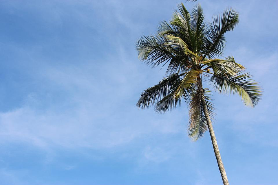 Palm, Sky, Sea, Vacations, Water, Summer, Relaxation