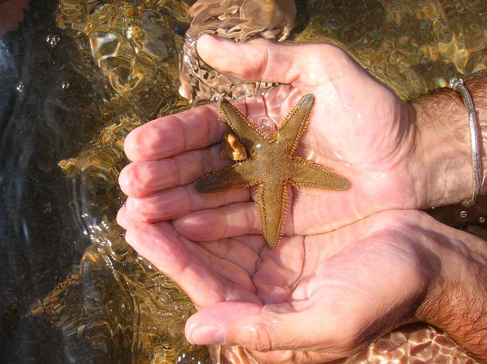 Sea, Starfish, Water, Holidays