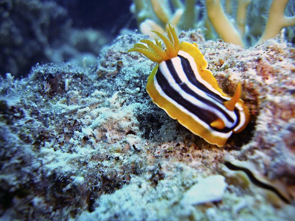 Slug, Snail, Diving, Underwater, Water, Sea