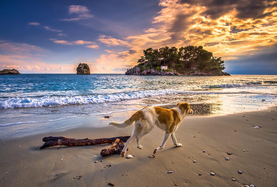 Sunset, Dog, Sea, Wave, Sky, Beach, Island, Greece
