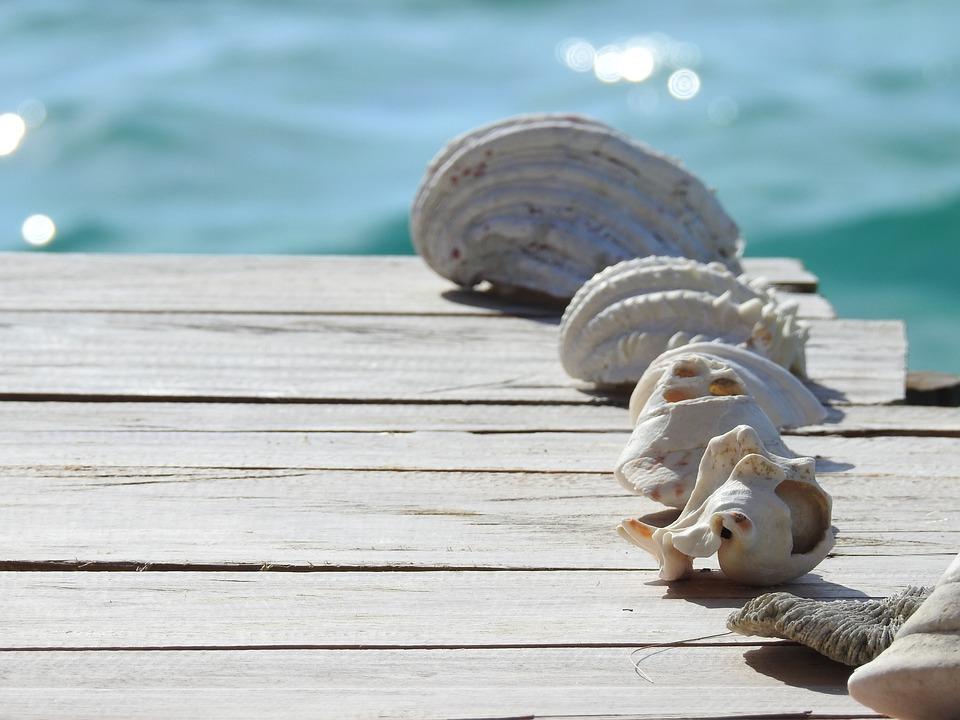 Shell, Wood, Sea