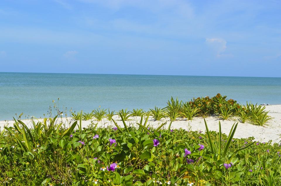 Mexico, Yucatan, Celestun, Beach, Paradise, Sea, Sunny