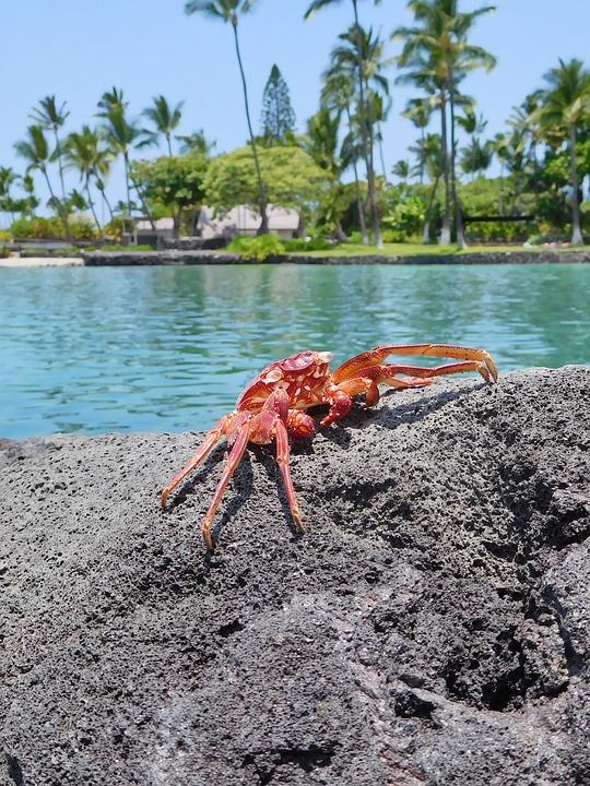 Crab, Seafood, Crustaceans, Sea, Hawaii