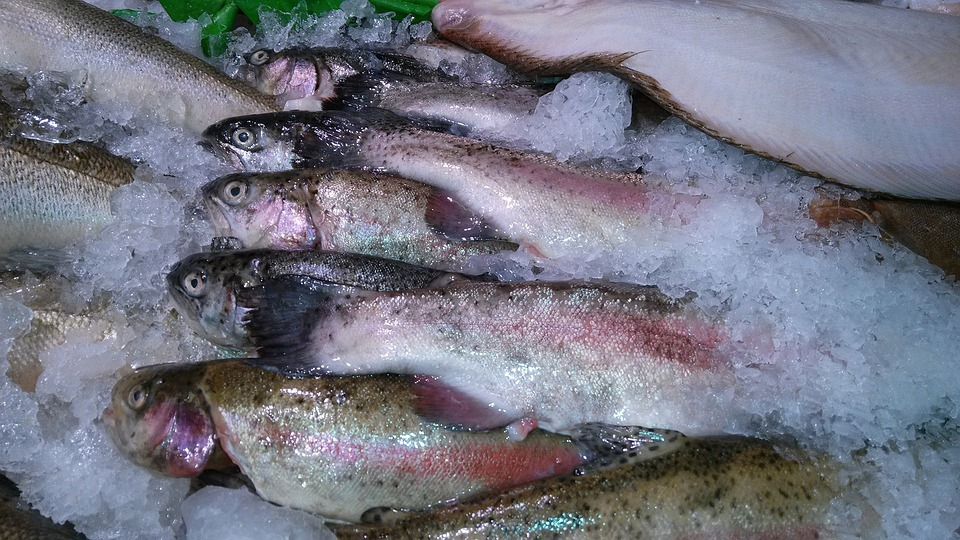 Fish, Trout, Ice, Seafood, Catch, Raw, Frozen