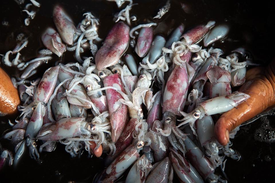 Squid, Fish, Oktopus, Seafood, Market, Food, Sea, Fresh