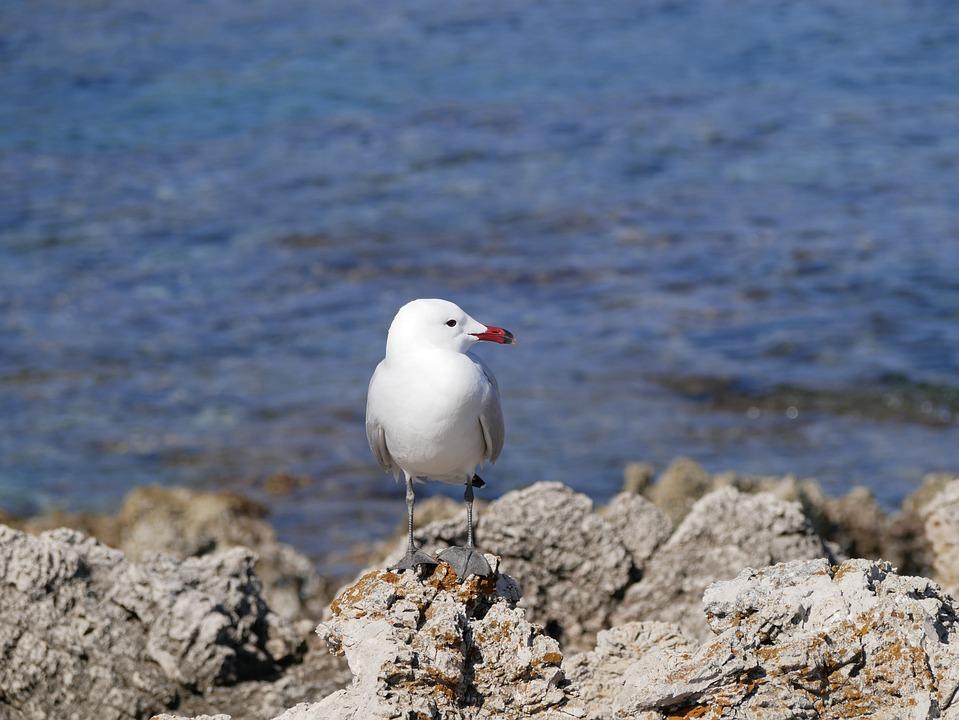 Seagull, Sea, Mediterranean, Bird, Animal, Nature