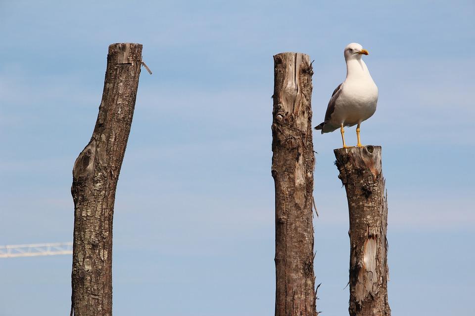 Seagull, Bird, Close, Birds, Pile