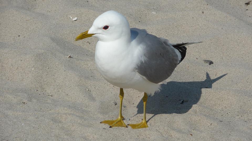 Seagull, Nature, Rest, Relaxation, Bird, Animal World