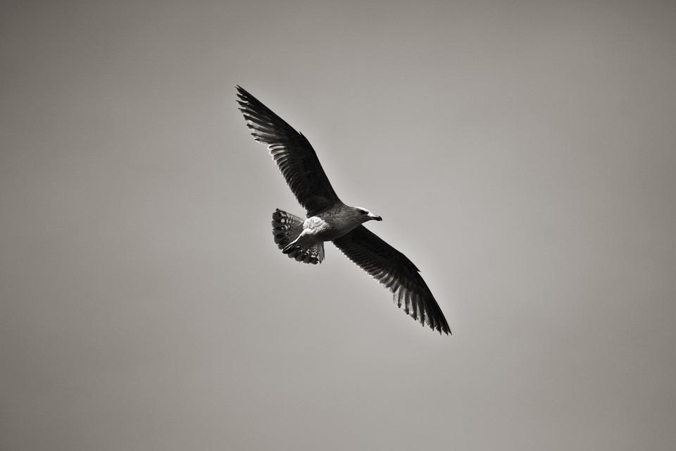 Bird, Seagull, Sea