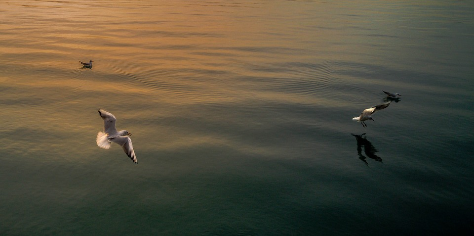 Seagull, Calm Sea, Tranquility