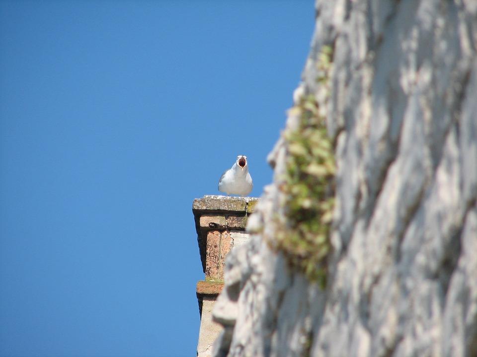 Trogir, Croatia, Seagull, Destination, Dalmatia