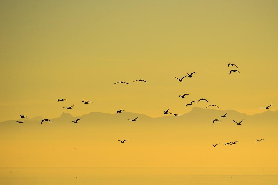 Flock, Birds, Seagull, Group, Nature, Sky, Sunset
