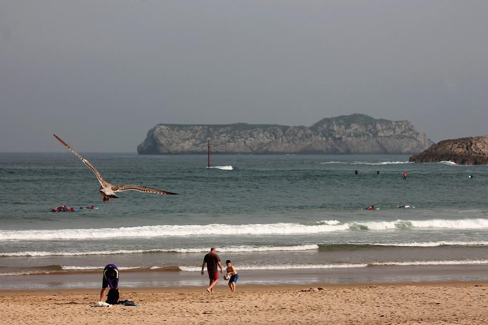 Beach, Summer, Seagull, Sea, Waves, Holiday, Ocean