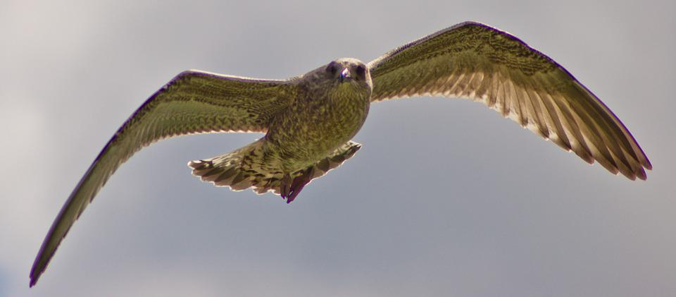 Free, Seagull, Freedom, Lake