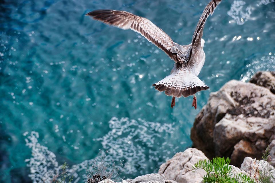 Seagull, Flight, Fly, Movement, Freedom, Nature, Sea