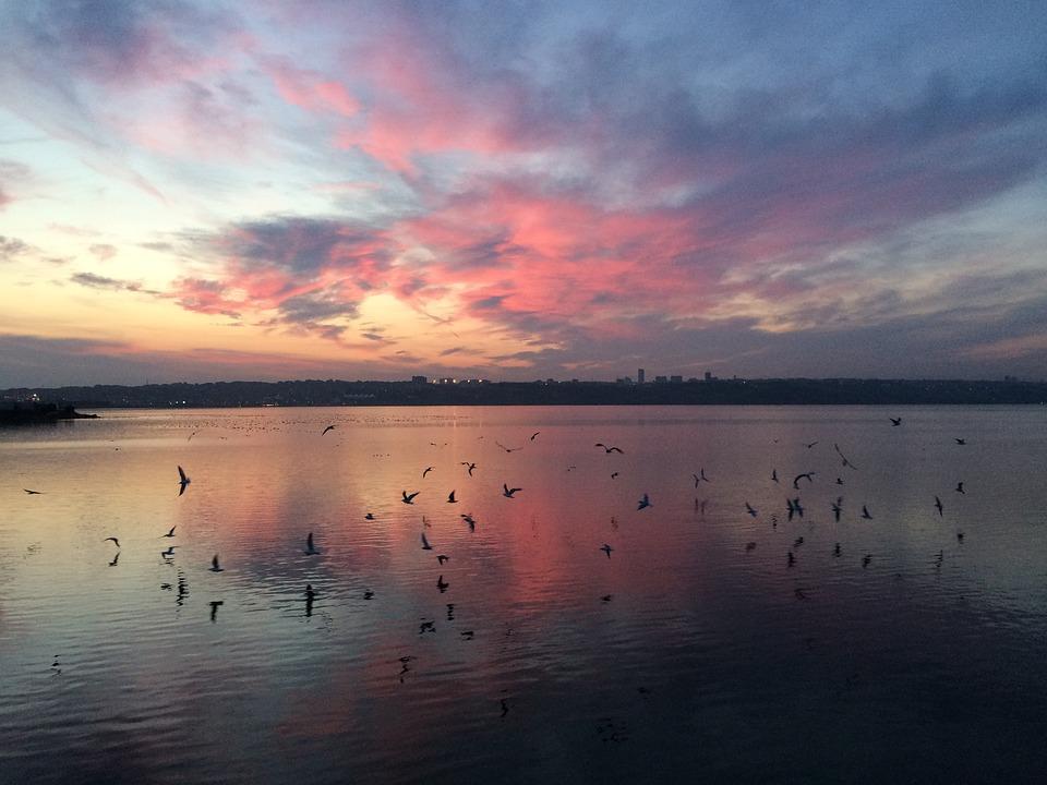 Küçükçekmece, Lake, Landscape, Nature, Seagull, Sky