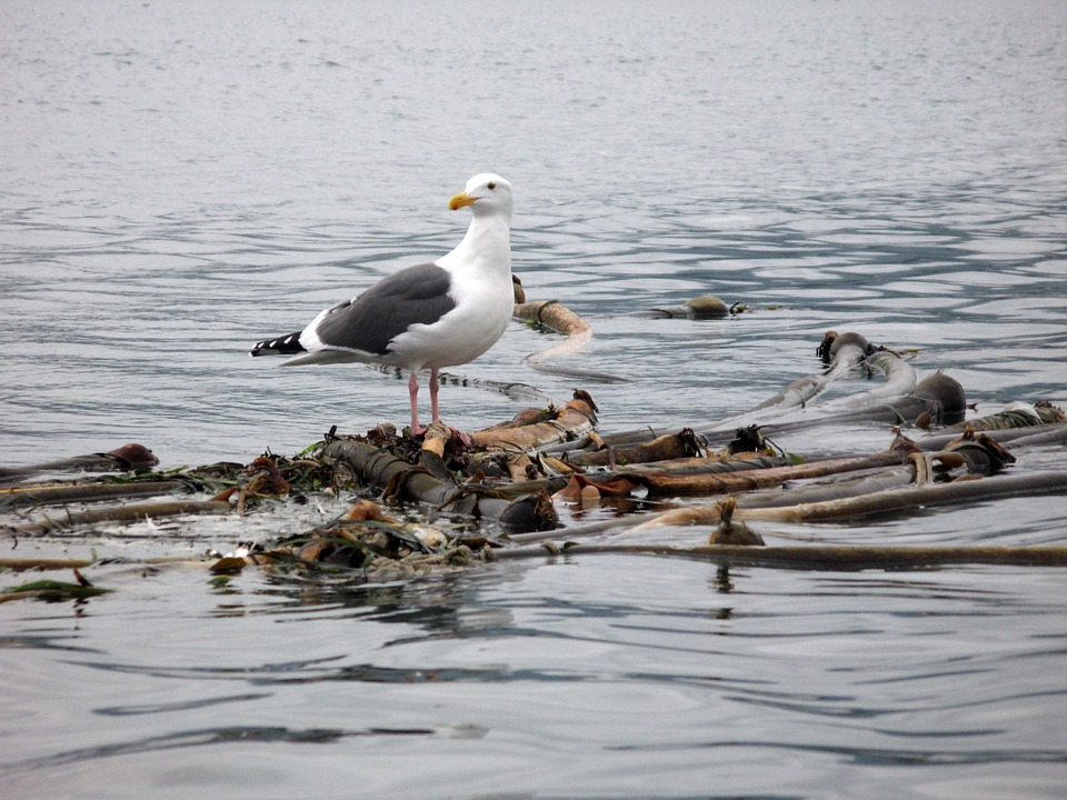 Animal, Bird, Seagull, Ocean, Water, Nature, Natural