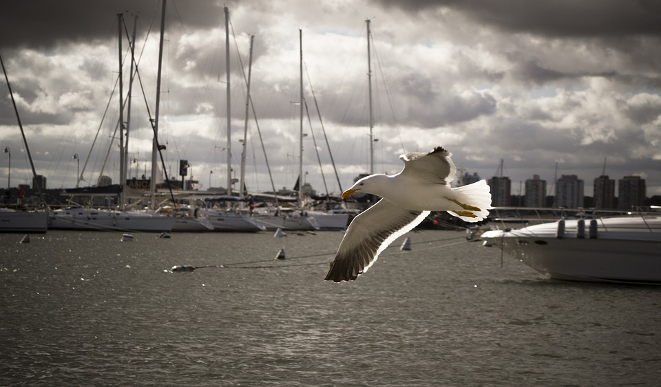 Seagull, Bird, Flying, Gull, Animal, Sea, Ocean, Port