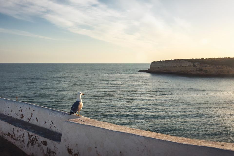 Seagull, Shore, Coast, See, Ocean, Water, Sunset, Sawn