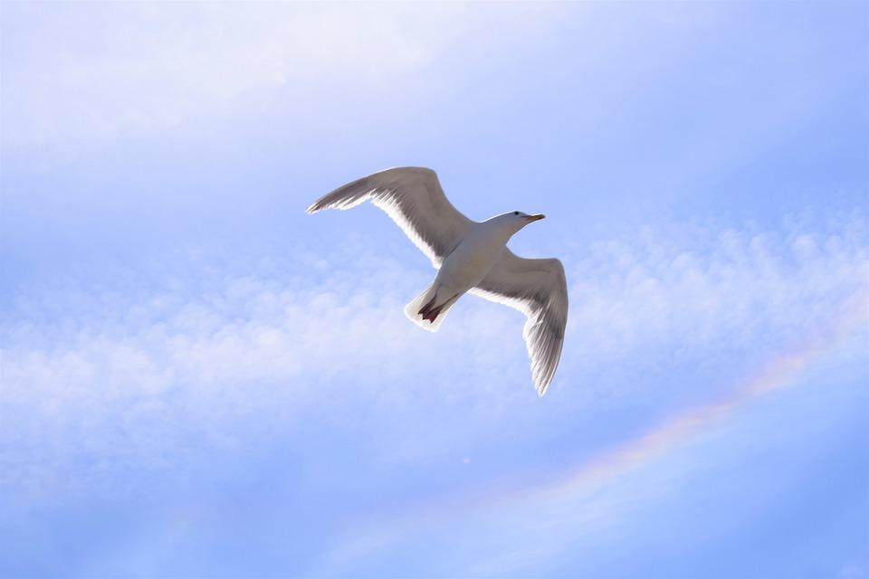 Seagull, Rainbow, Sky, Nature, Bird, Summer, Sea, Blue