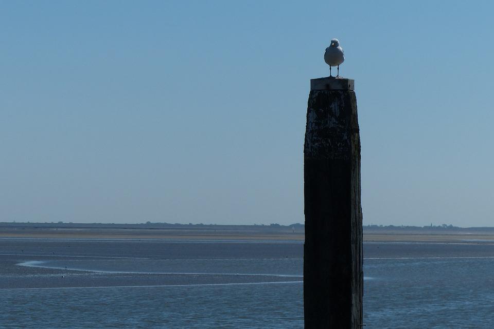 Meerpaal, Schiermonnikoog, Seagull