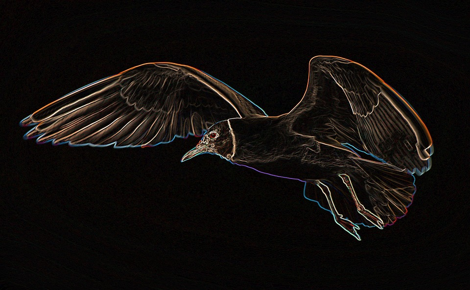 Seagull, Flight, Bird, Flying, Sky, Animal, Water Bird