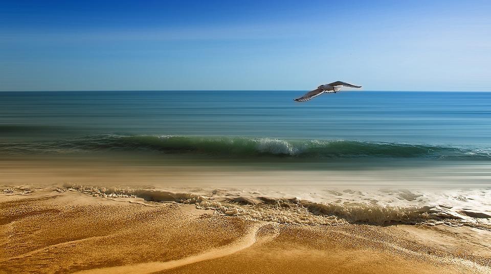 Seagull, Beach, Summer, Sea, Sand, Freedom, Horizon