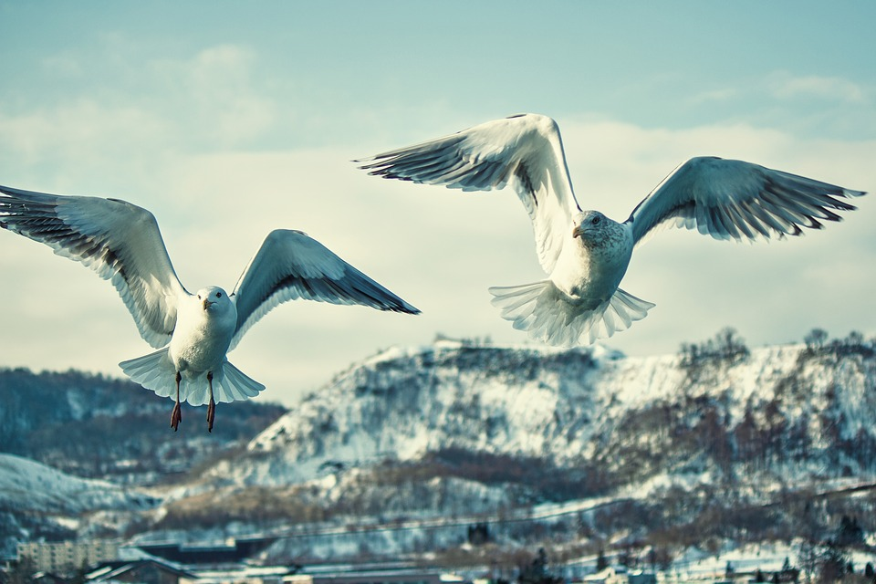 Bird, Nature, Waters, Wildlife, Seagull, Wings, Flight