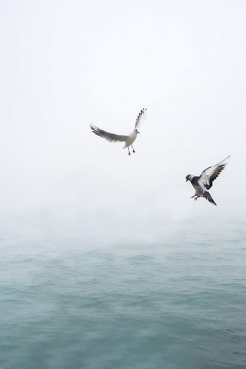 Seagull, Dove, Wing, Bird, Sea, Flying, Venice