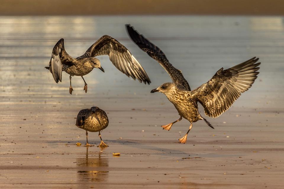 Bird, Fauna, Nature, Animal, Seagulls, Flight