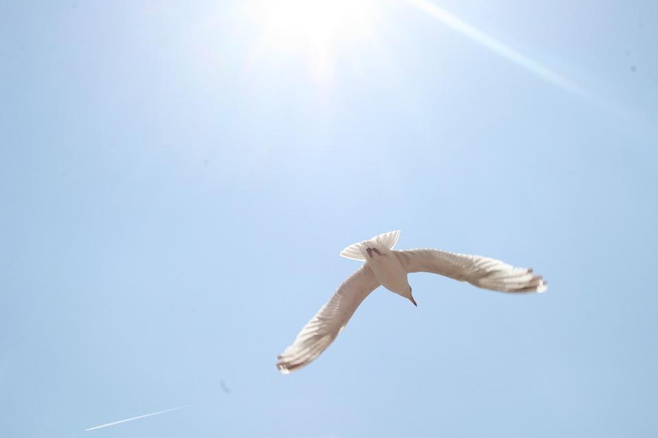 Seagull, Sun, Blue Sky, Seagulls, Flight, Hope, Wings