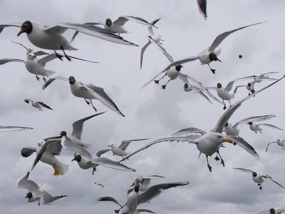 Seagulls, Birds, Seagull, Wings, Beach, Sea