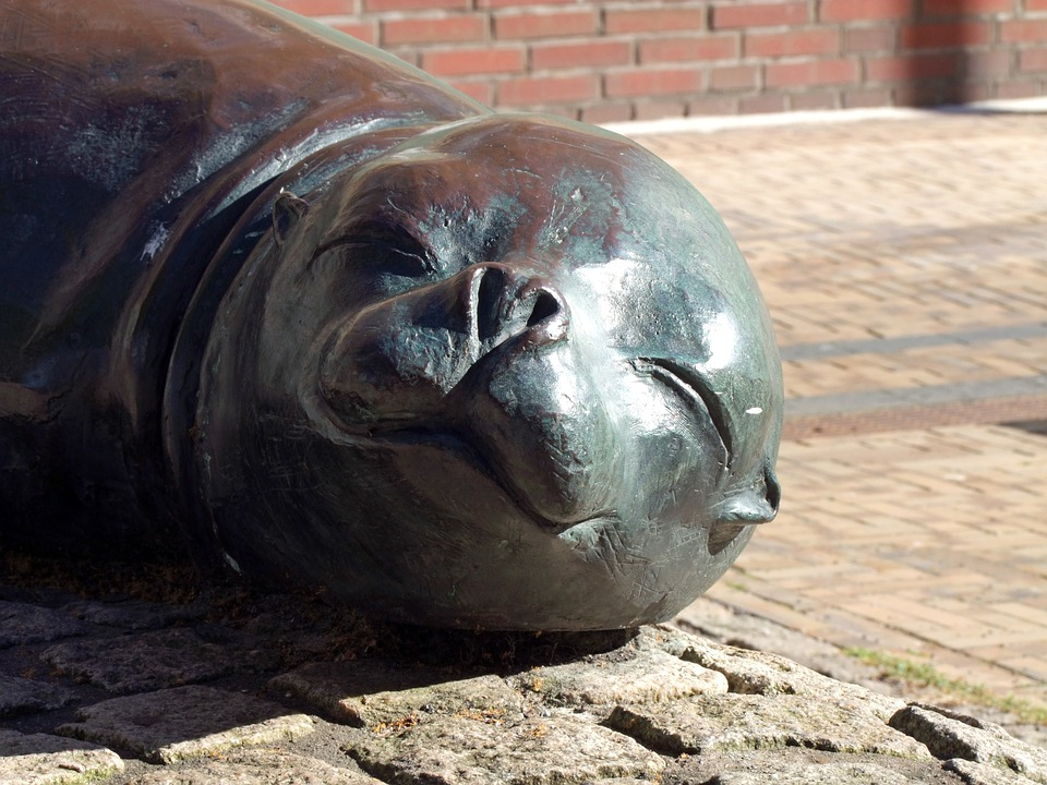 Sculpture, Fig, Seal, Robbe, Head, Young Animal, Animal