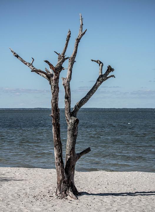 Dead Tree, Seascape, Landscape, Beach, Sand, Island