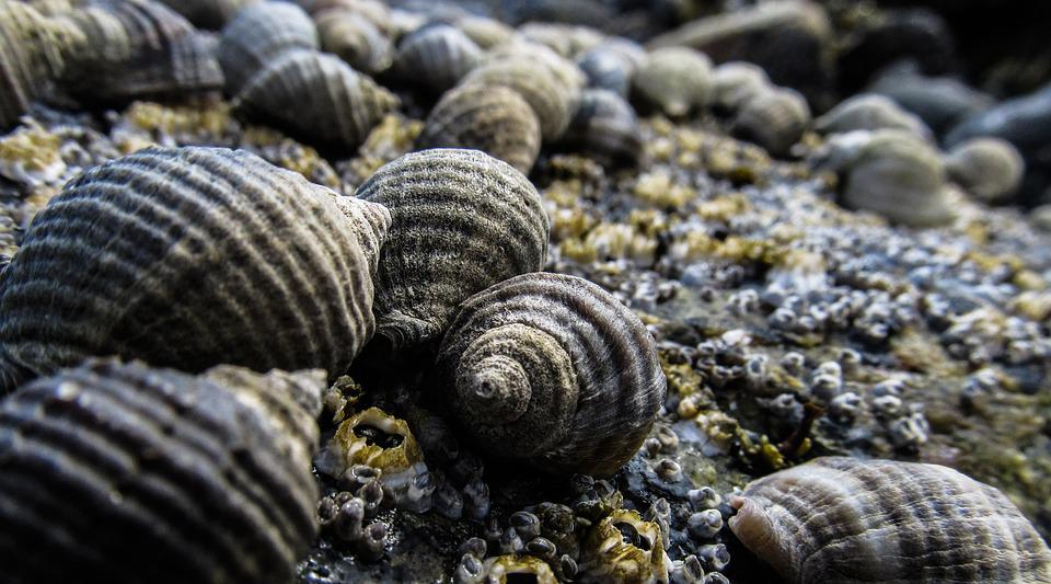 Shells, Seashell, Sea, Ocean, Marine, Beach, Summer