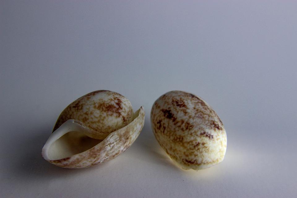 Shell, Nature, Closeup, Ocean, Seashell, Water
