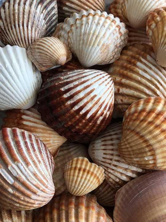 Snails, Sea, Seashell, Spain, Healing, Nature