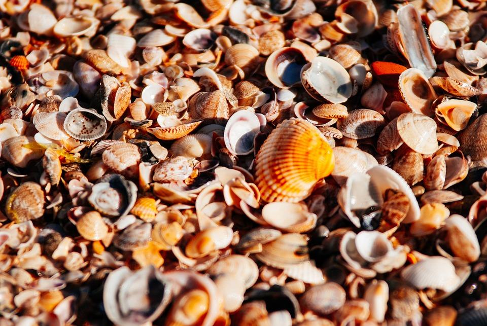 Sea, Beach, Orange, Shore, Pearl, Seashells, Seashell