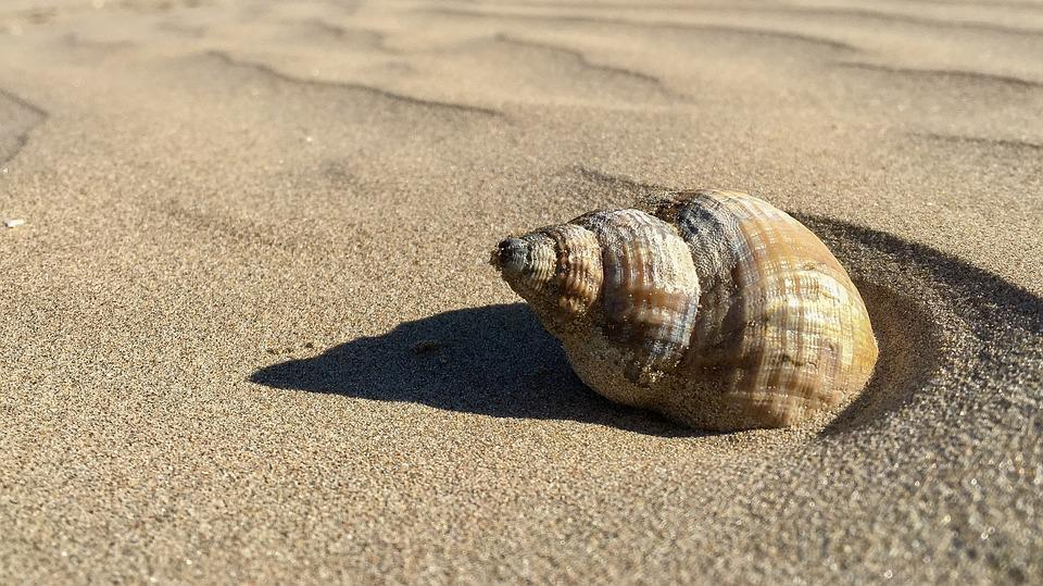 Beach, Shell, Sand, Coast, Seashell, Spiral, Coastline