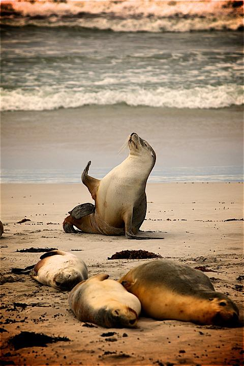Sea, Beach, Sand, Animals, Seashore, Shore, Seals