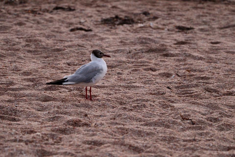 The Sea Of Azov, Seagull, Beach, Shore, Seashore, Sand