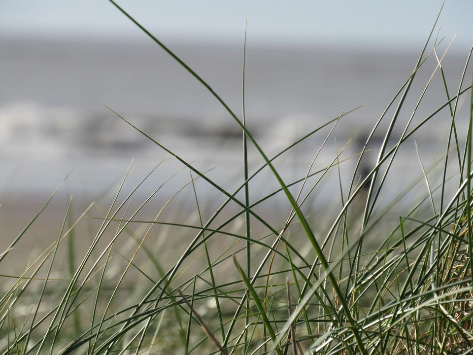 Nature, Grass, Dune, Seashores