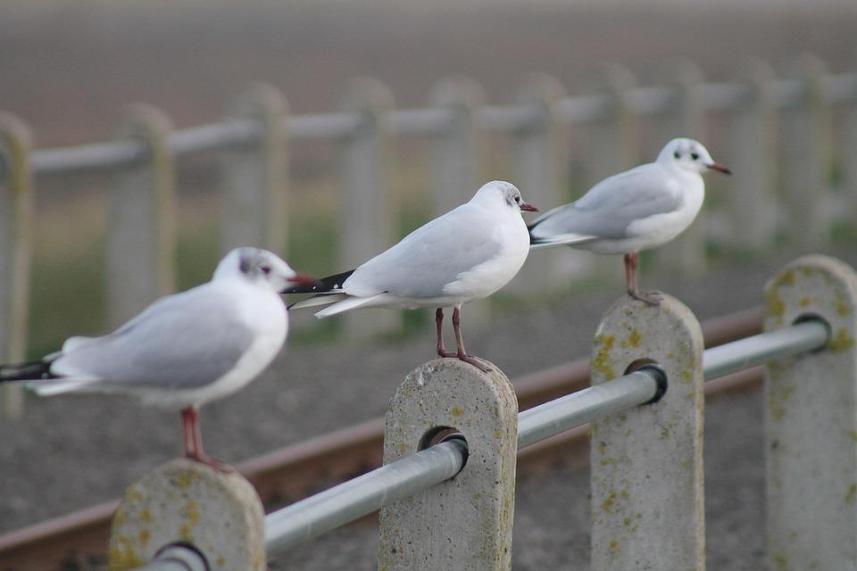 Seagulls, Seaside, Coast
